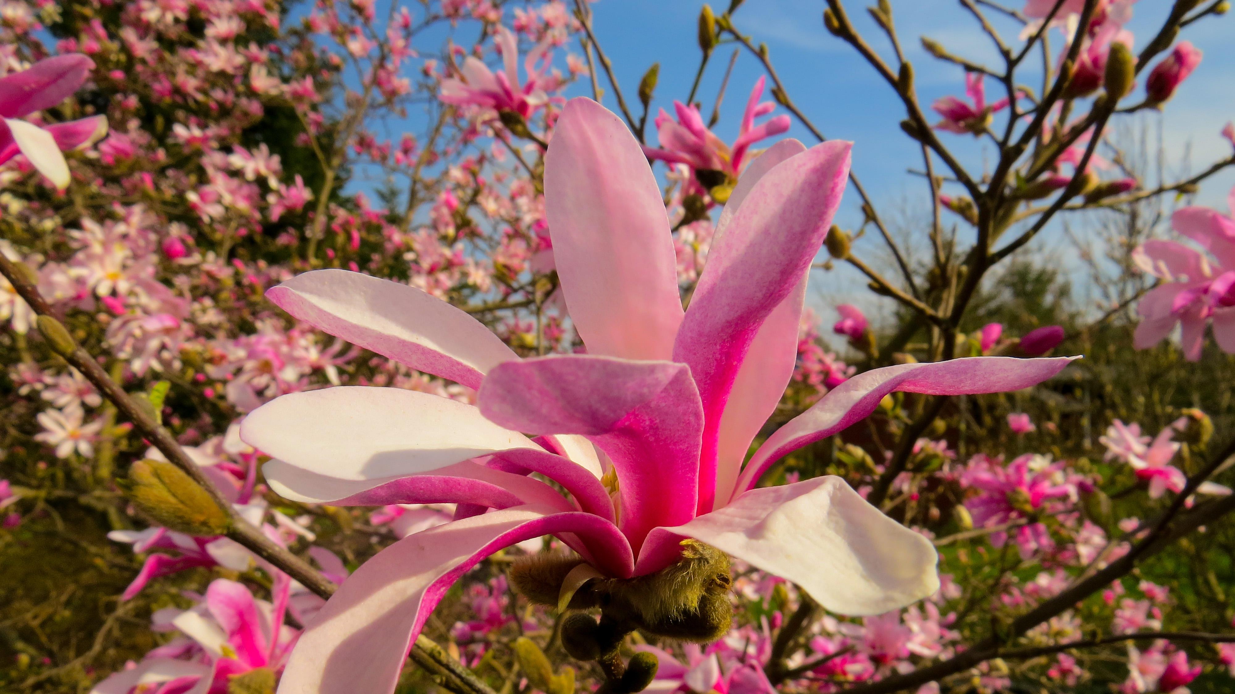 Wiosna w obiektywie Asi