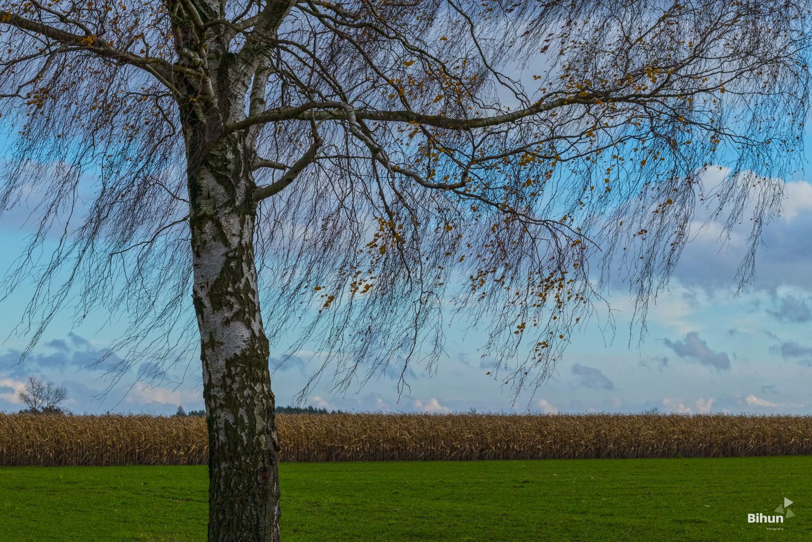 Jesienny wiatr …